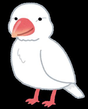 bird_bunchou